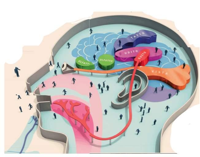 """Perché occuparsi di """"cervello""""? Nel mondo circa un terzo della popolazione adulta soffre di un disturbo mentale come depressione, ansia  o schizofrenia."""