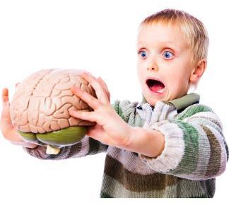 Settimana del Cervello: 13 – 19 MARZO 2017- Tanti stimoli per occuparci di lui