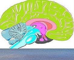 Allenamento del cervello